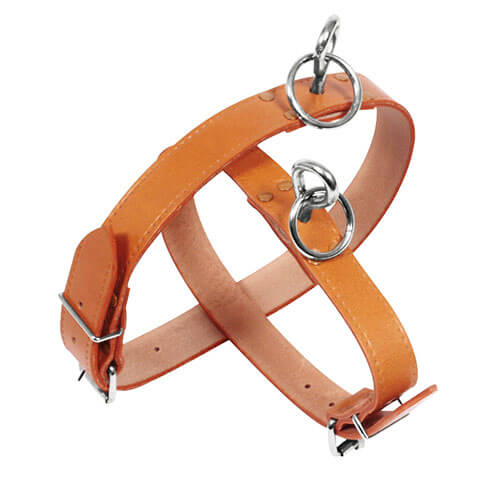 More informations about: Collar fastener leather dog - Coupe franc riveted