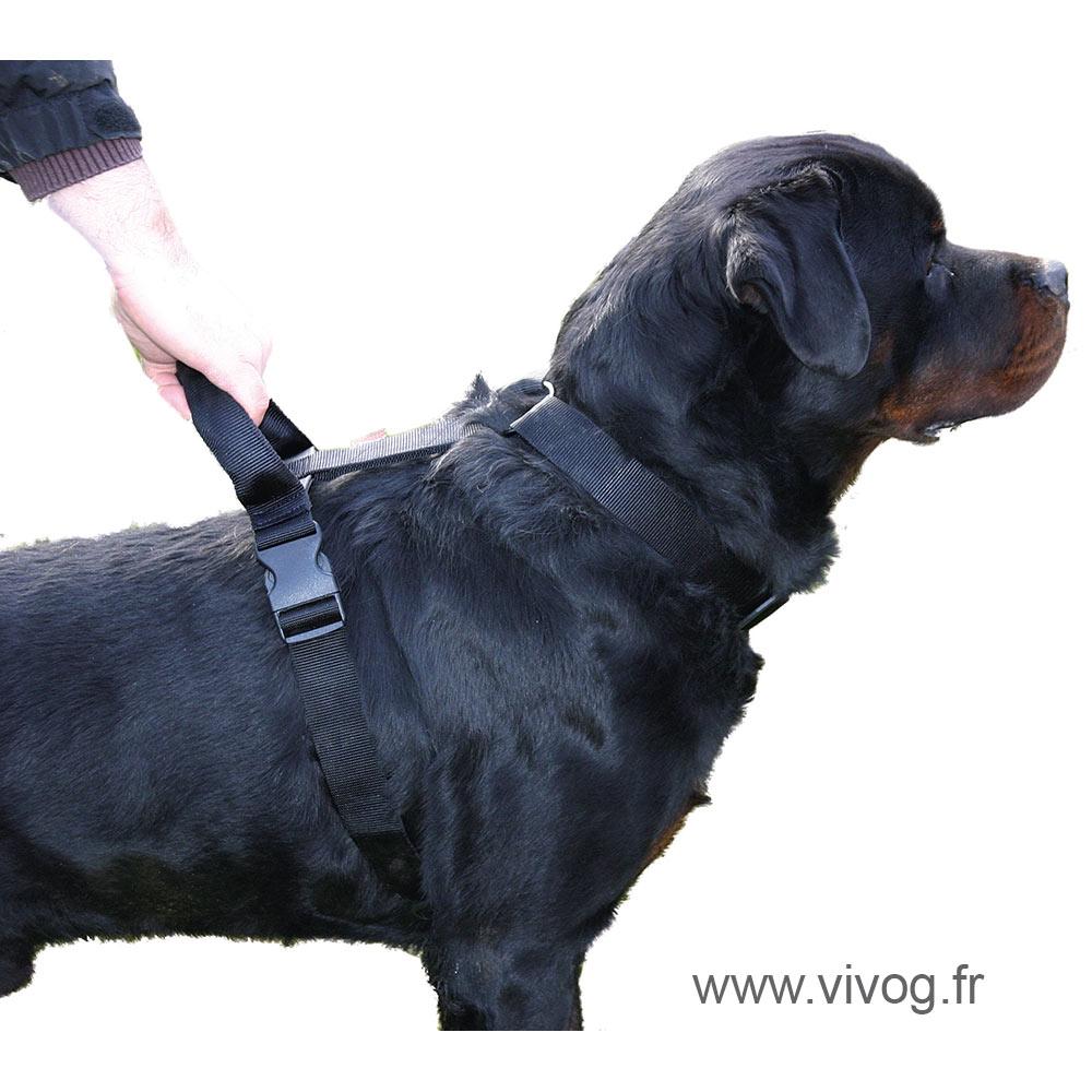 Harnais réglable d'intervention pour chien
