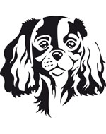Cavalier King Charles Sticker - 2 sizes - 4 colors - 15cm - White