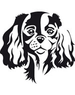 More informations about: Cavalier King Charles Sticker - 2 sizes - 4 colors