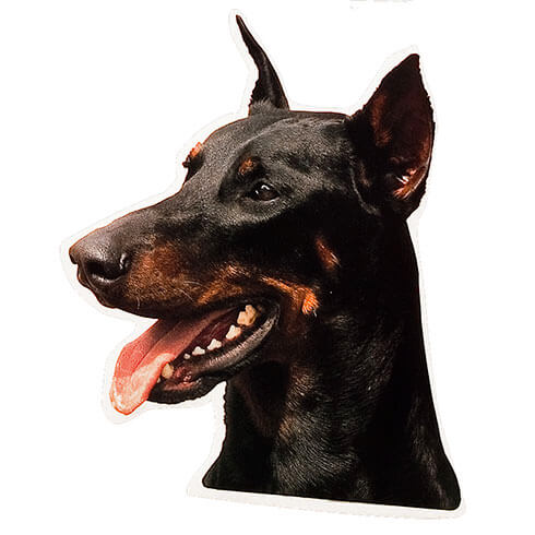 More informations about: Doberman Sticker - 15cm