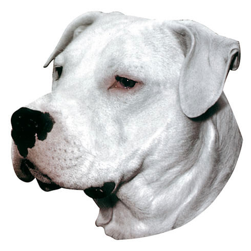 More informations about: Argentinian Mastiff Sticker - 15cm