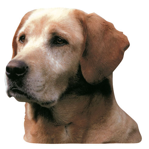 More informations about: Labrador Sticker - 15cm