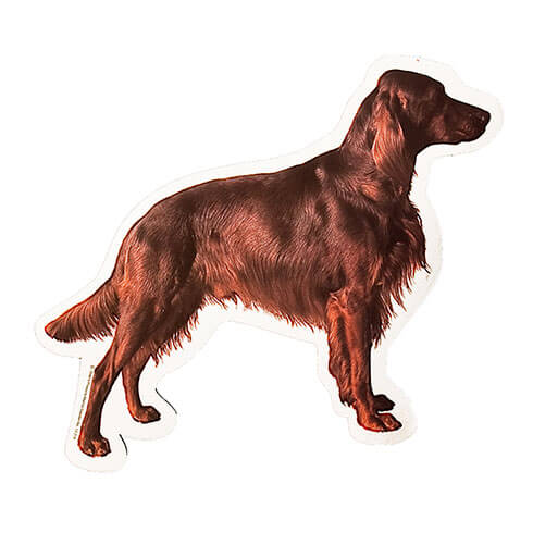 More informations about: Irish Setter Sticker - 15cm