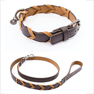 More informations about: Dog collar - Explorer collection - Téo Jasmin