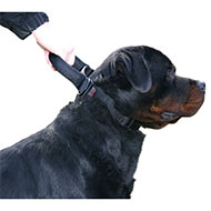 More informations about: Adjustable collar intervention Dog