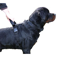 More informations about: Adjustable dog harness intervention