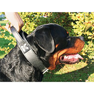 More informations about: Black leather dog collar intervention - Black & Metal